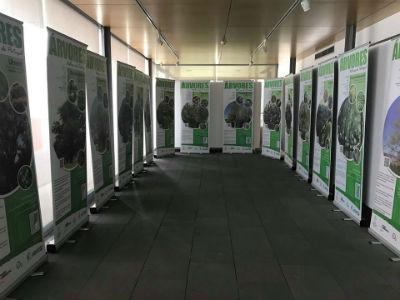 Árvores Nativas de Portugal: Solar do Ribeirinho recebe exposição